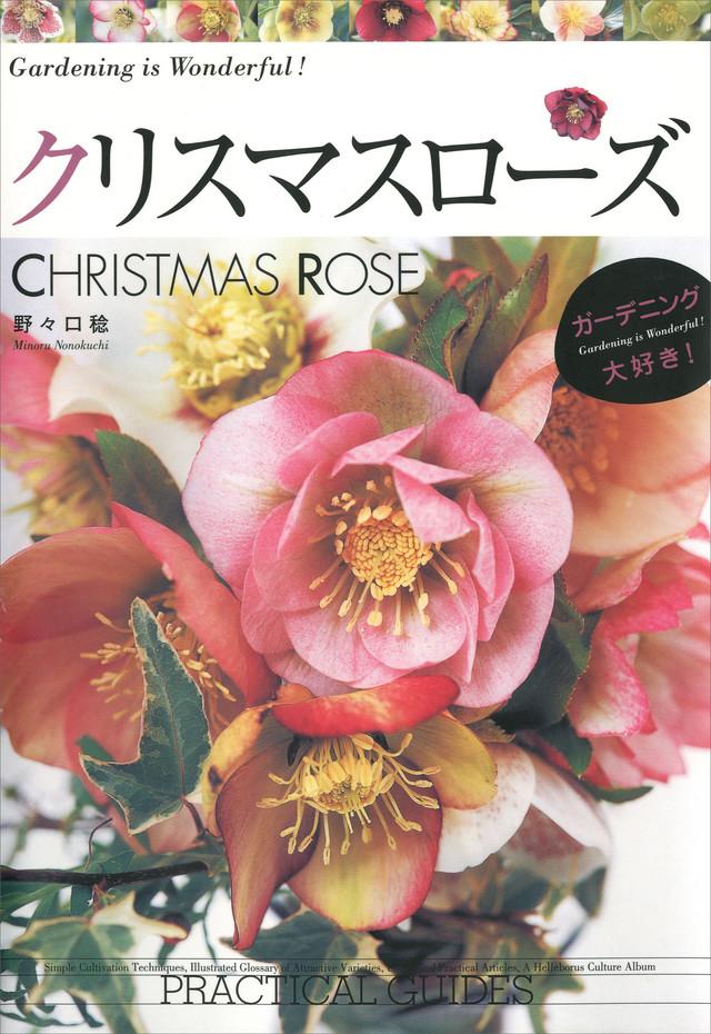 クリスマスローズ