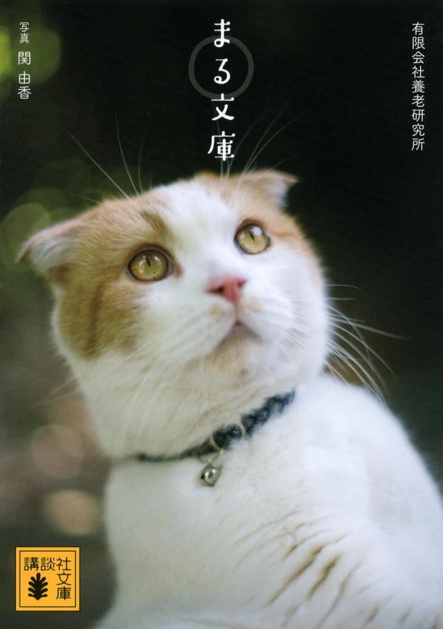 『まる文庫』有限会社養老研究所/関 由香・写真